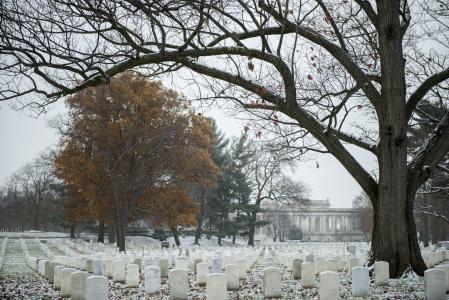 Arlington National Cemetery winter trees