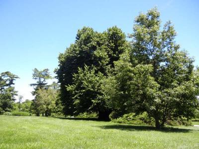 Missouri State University Ozarks Arboretum