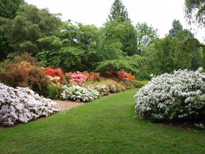 Azalea Way Niall Dunne-Arboretum Foundation