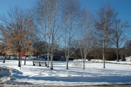 Greenwich Town Arboretum - winter trees