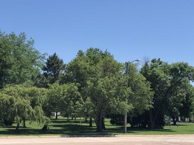 Crete School trees