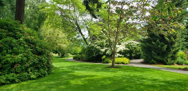Community Park trees