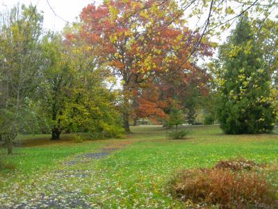 Colonial Park fall trees