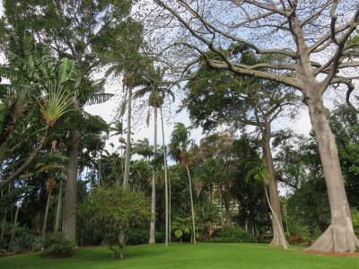 Foster  Gardens