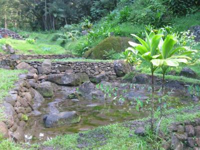 Harold L. Lyon Arboretum