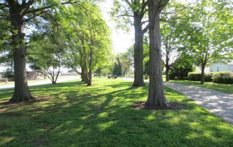Bethalto trees