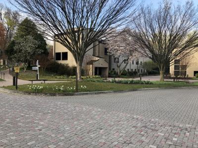 campus trees