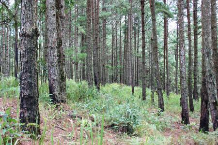 Lam VIen Forest