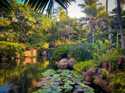 Four Seasons Resort Lanai trees