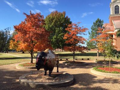 Oklahoma Baptist University Arboretum