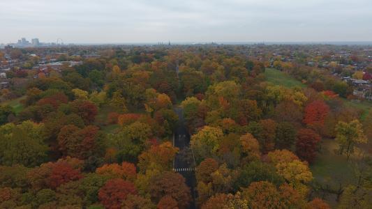 Tower Grove Park fall