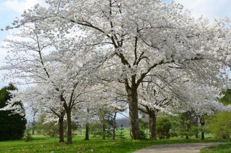 The Dawes Arboretum April trees