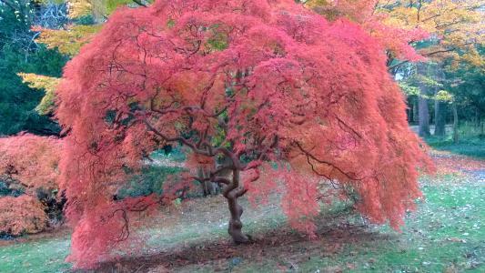 Bailey Arboretum