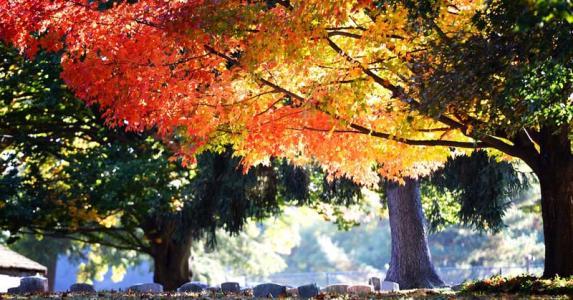 Abington Friends Arboretum