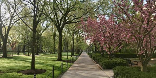 Pennsylvania State University, University Park, spring trees