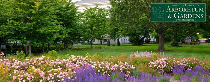 American University Arboretum