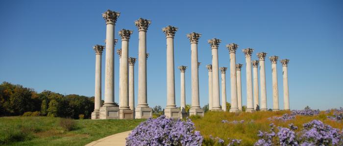 Autumn Capitol Column
