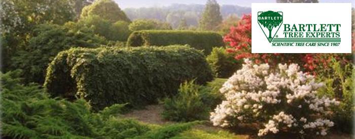 Bartlett Tree