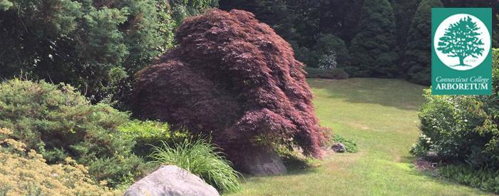 Conn College Arboretum