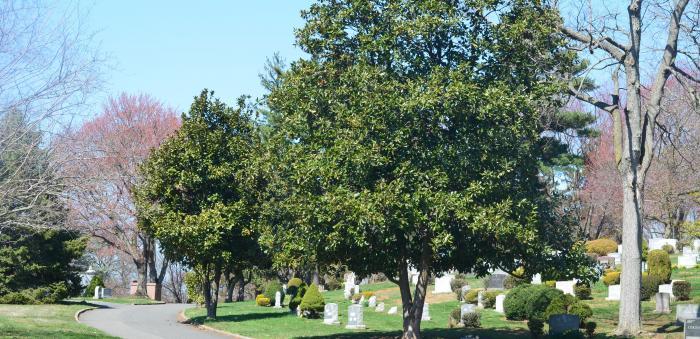 Fairview trees