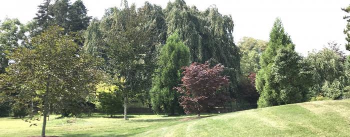 Somershome grounds
