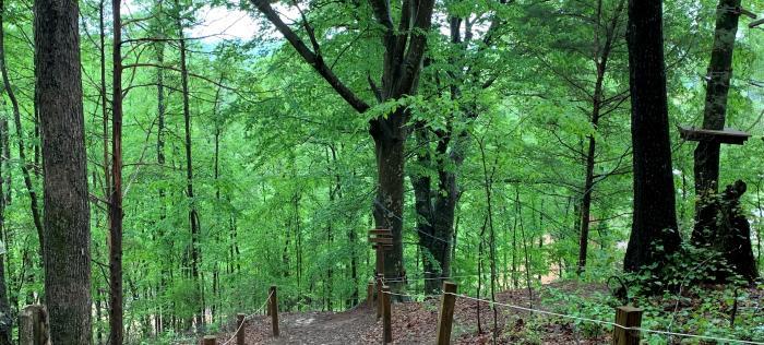 Arboretum trail
