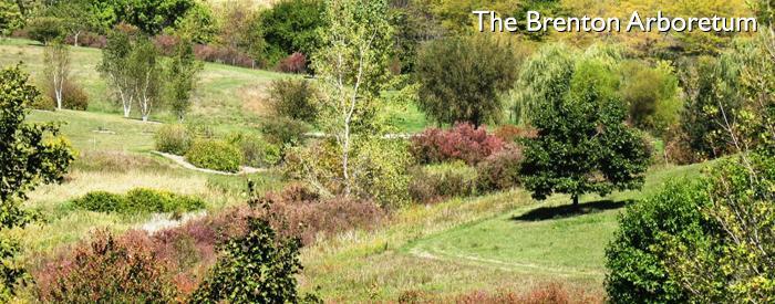 The Brenton Arboretum