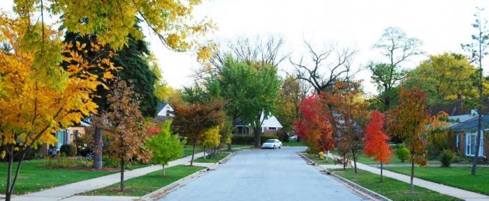 Homewood tree street