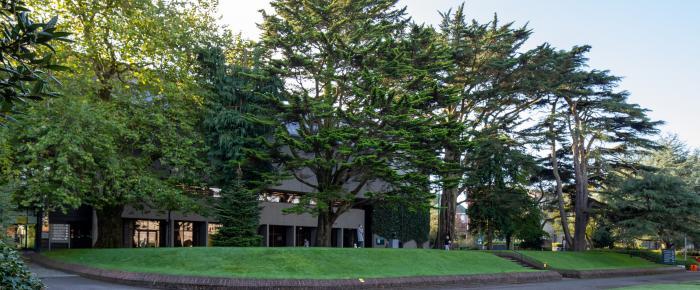 UCC Arboretum trees