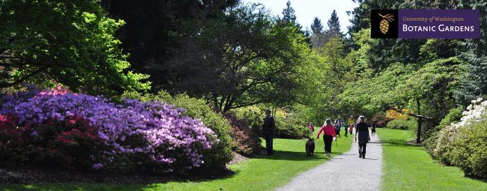 UW Botanic Gardens Azalea Way-Larry Howard