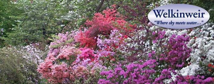 Welkinweir spring blooms