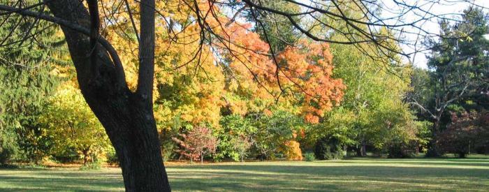 Ashland- The Henry Clay Estate - fall trees
