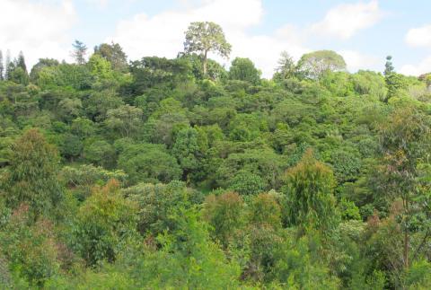 Brackenhurst Botanic Garden led forest restoration project (post restoration image)