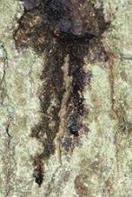 dark fluid, oaks